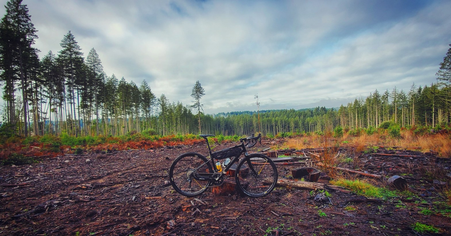 1000 acre wood